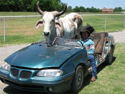 Trenktas šeimininkas, automobilis, gyvūnas. Gyvūnas trenkto šeimininko automobilyje?